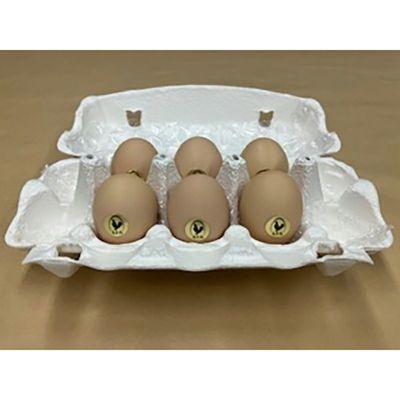 天来烏骨鶏卵 6個入り